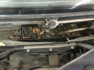 Cabin air filter located underneath windshield wiper cowl area.